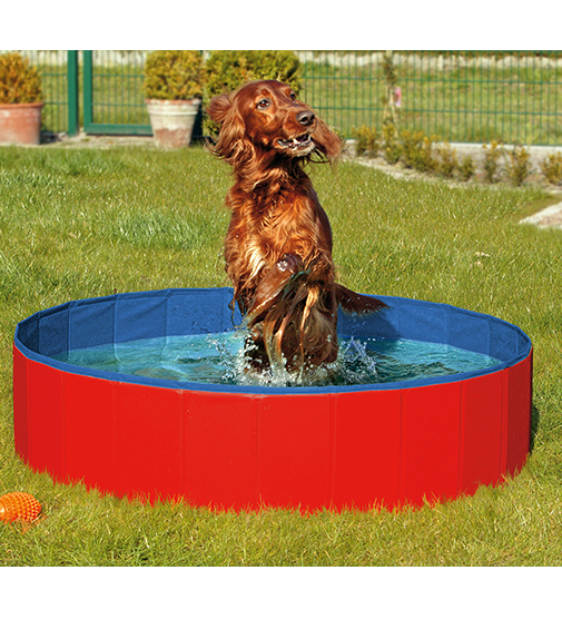 doggypool.png