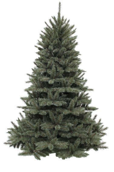 Sapin de noël triumph tree forest frosted  - normal