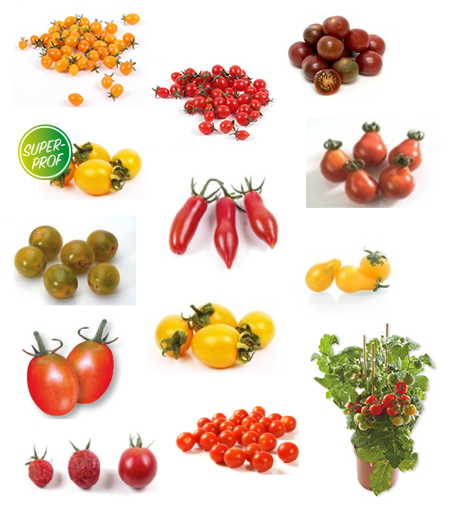product-assortiment-snacktomaten.png